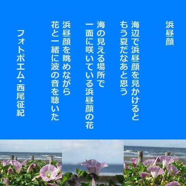 0-1-1浜昼顔.jpg